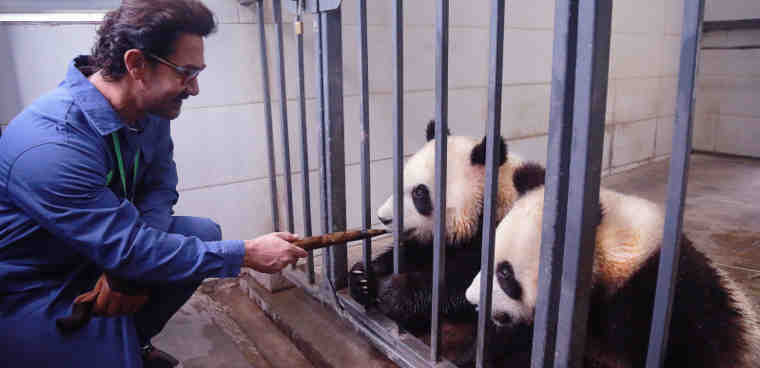 Bollywood Actor Aamir Khan Meets Giant Pandas in Sichuan