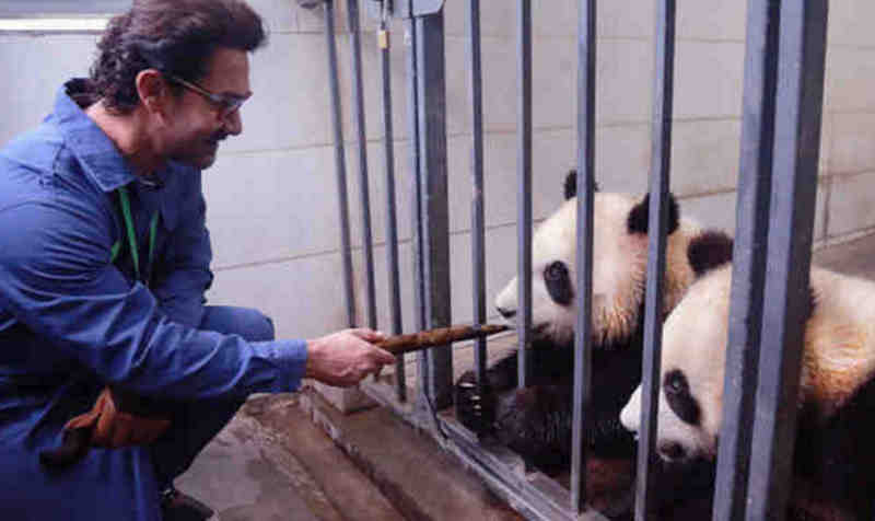 Bollywood Actor Aamir Khan Meets Giant Pandas in Sichuan (file photo)