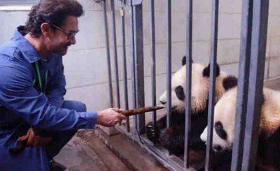 Bollywood Actor Aamir Khan Meets Giant Pandas in Sichuan (file photo)